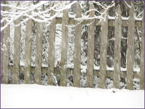 backyard with snow falling