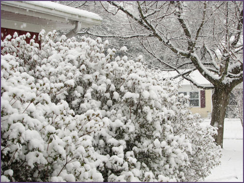 snow in front yard