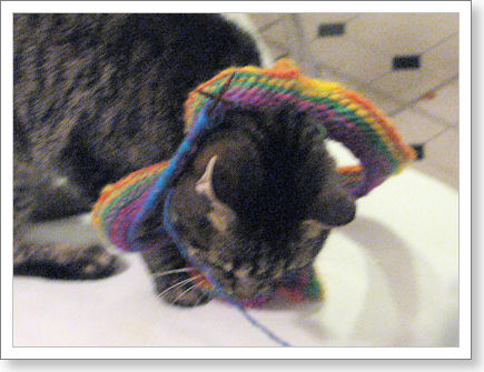 cat with head through knitting on circular needles