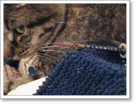closeup of tabby cat with knitting