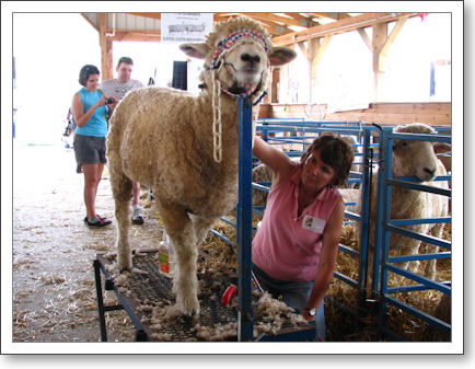 Sheepie gets the full beauty treatment