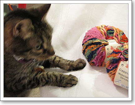 Kitty wants the yarn
